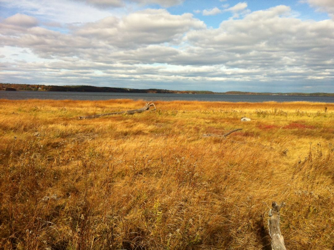 Salt marsh buffer on Great Bay in New Hampshire