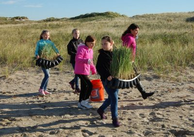 Hampton-Seabrook Estuary Sand Dune Restoration, Phase I