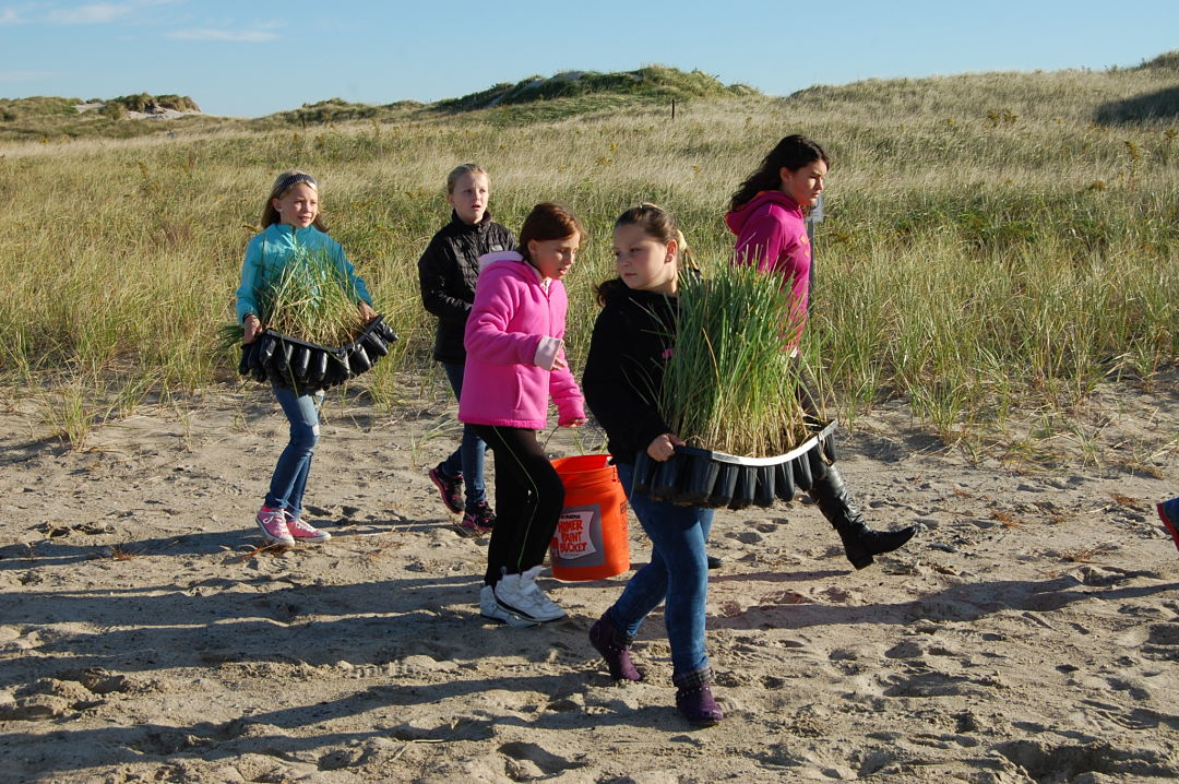 Dune planting (credit: Rebecca Zeiber, NH Sea Grant)