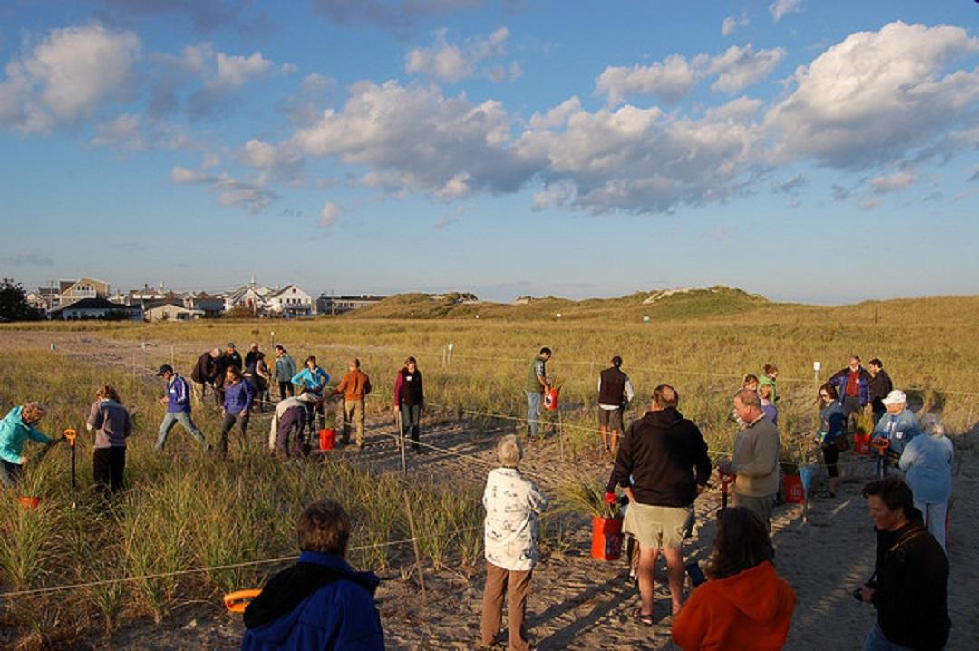 Hampton Beach State Park community dune grass garden