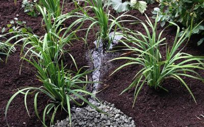 Soak Up the Rain New England Webinar Series: Rain Gardens to the Rescue