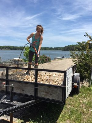 Amanda Moeser, The Nature Conservancy, preparing cages for the 12 million oyster larvae to grow into spat-on-shell, at UNH's Jackson Estuarine Laboratory. © The Nature Conservancy