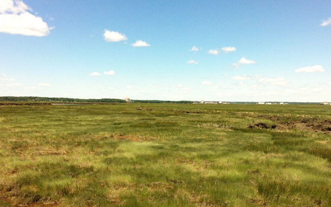 Building Ecological Resilience in Estuaries