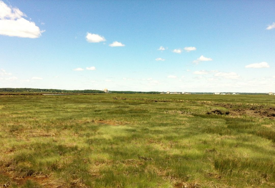Salt marsh in Seabrook