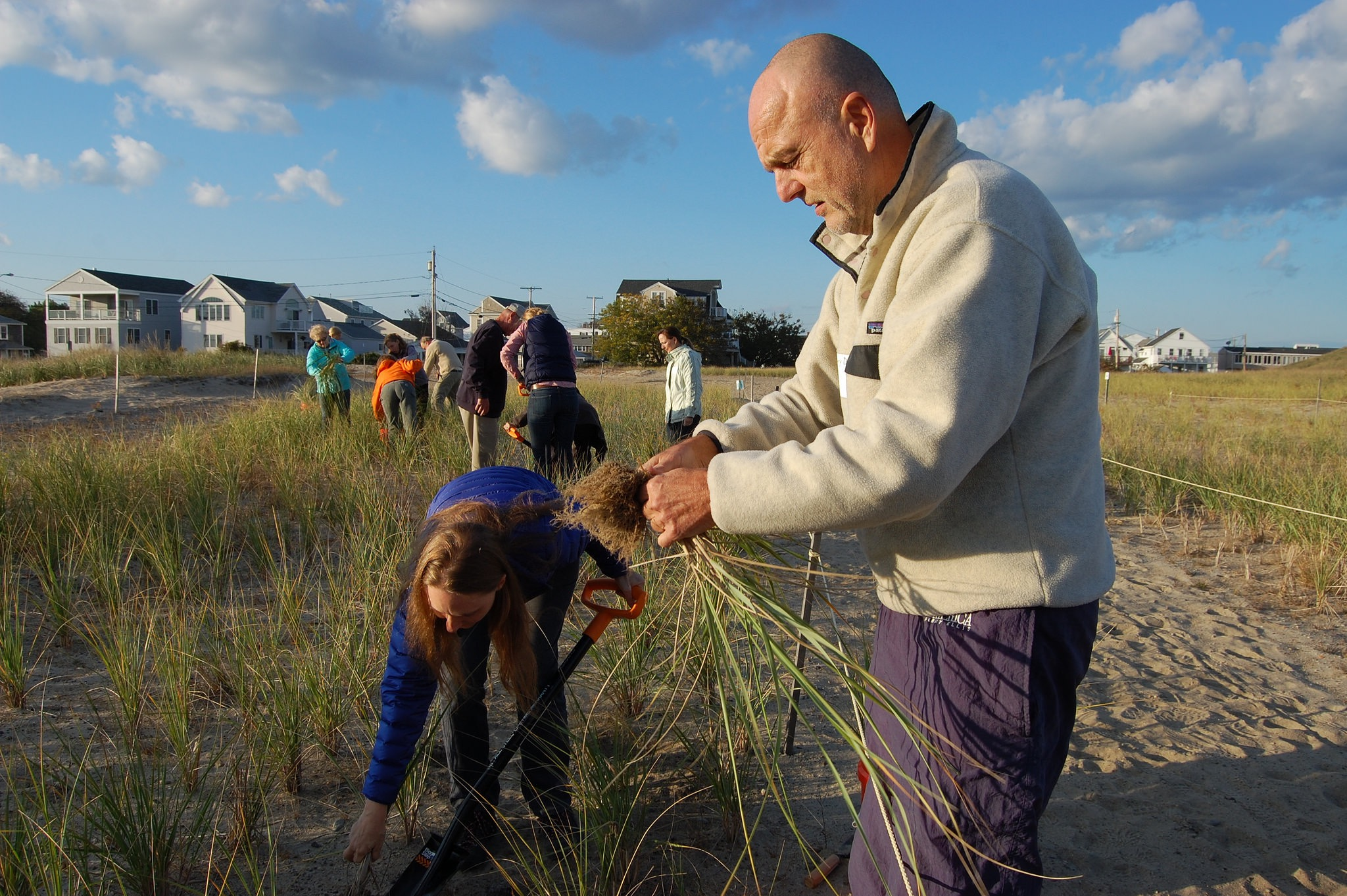 Volunteers harvest dune grasses at the Hampton Beach Community Dunegrass Garden