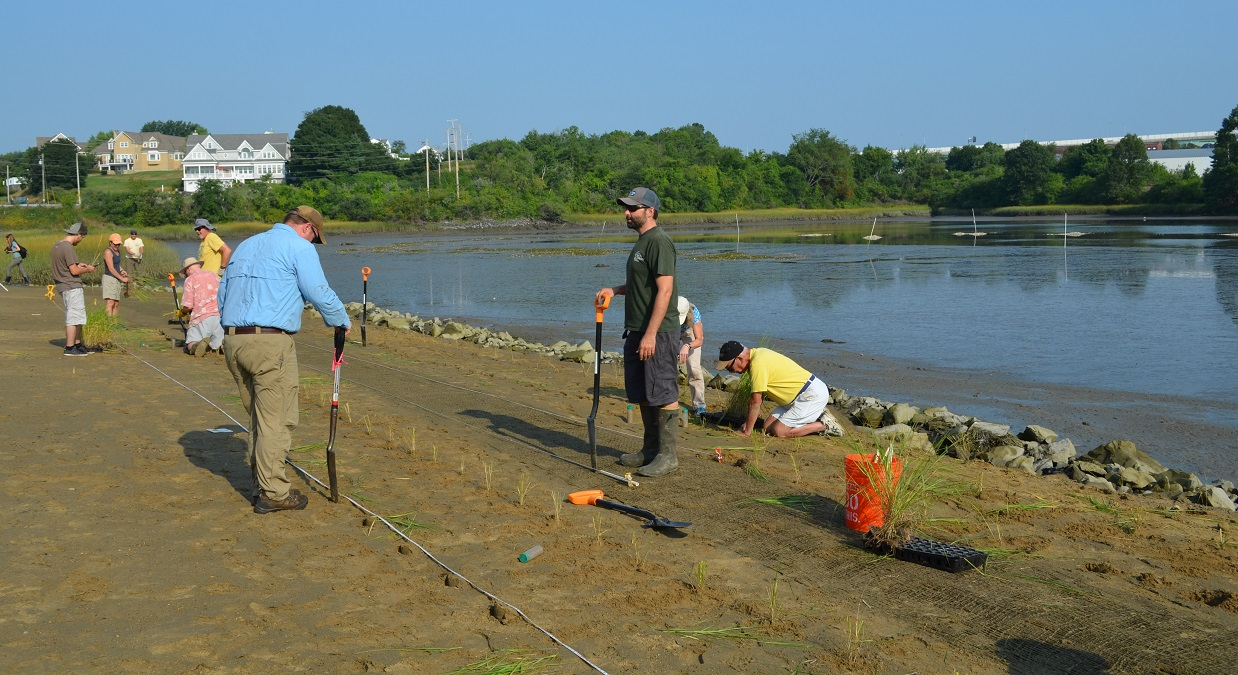 Planting a living shoreline at Cutts Cove in Portsmouth, NH