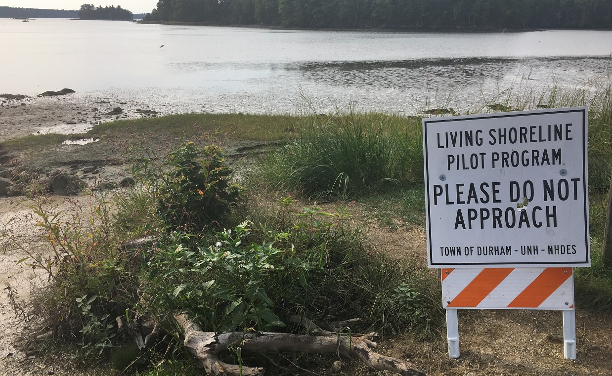Living shoreline project to control erosion at Wagon Hill Farm in Durham, NH