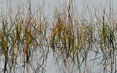 Proposals Requested for New Hampshire Coastal Resilience Grant Projects