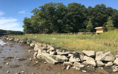 Living shoreline project creates a more resilient Wagon Hill Farm