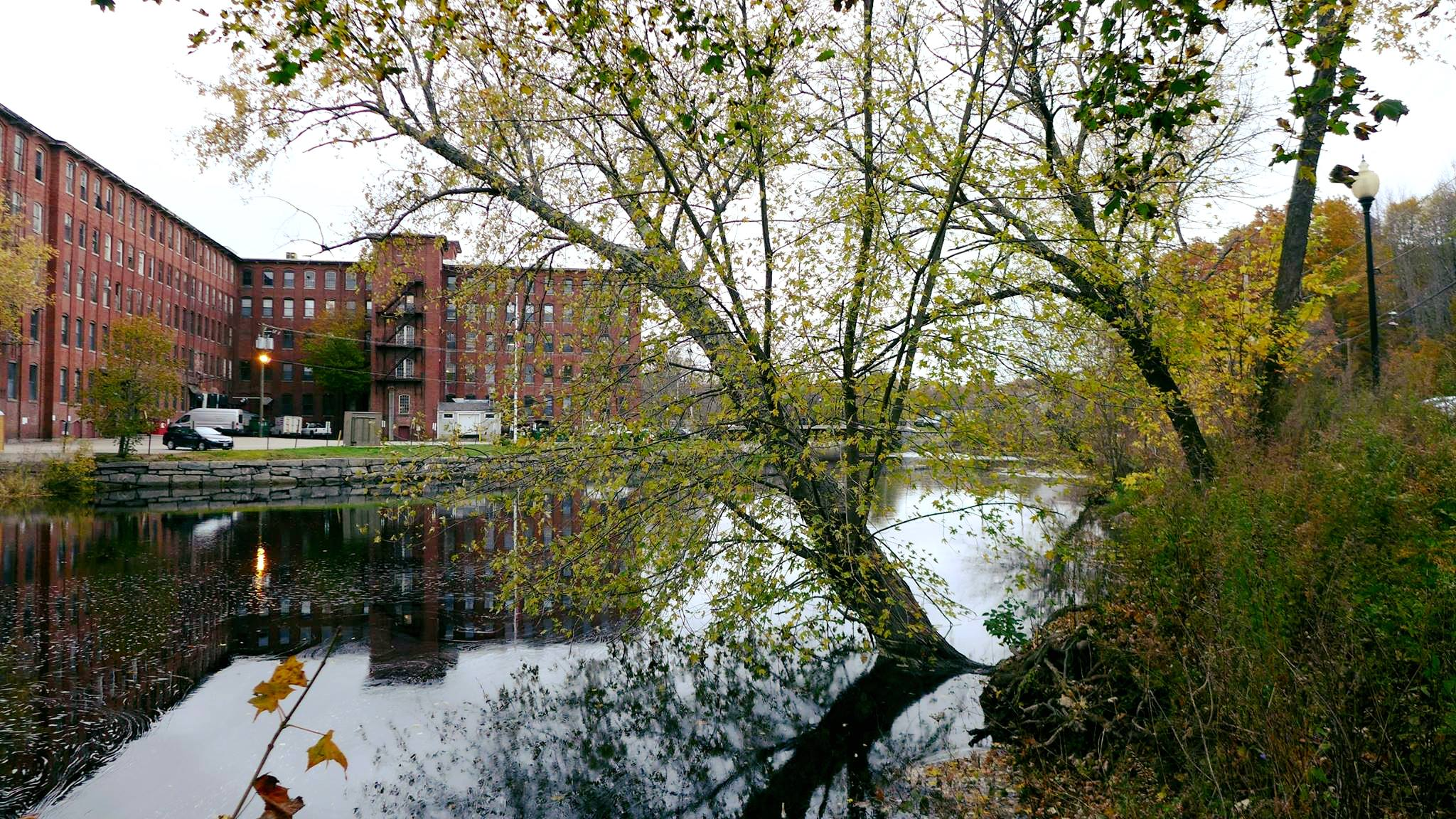 Scenic shot of a tree tilting over the river in Dover