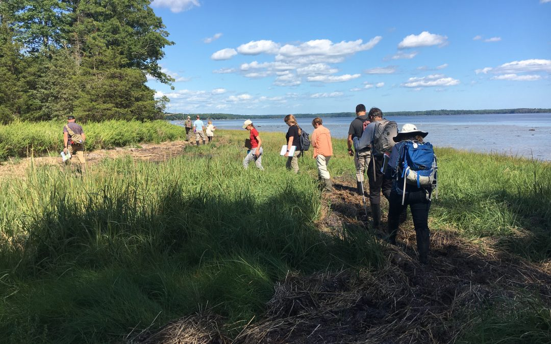 Designing green solutions: Living shoreline ideas for Great Bay sites